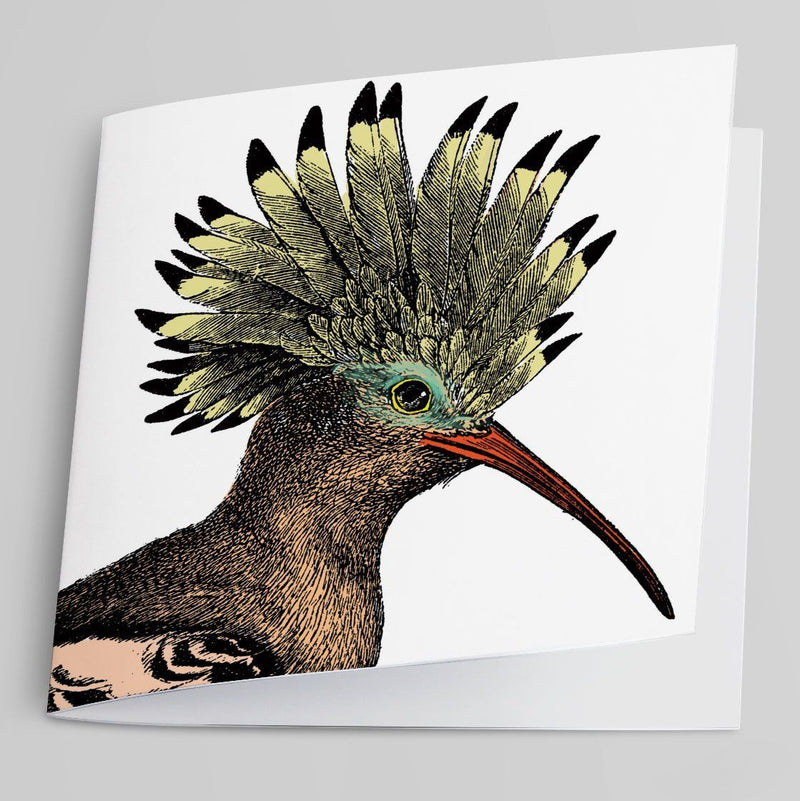 Hoopoe-Greeting Card-Tony Pinchuck-Tony Pinchuck
