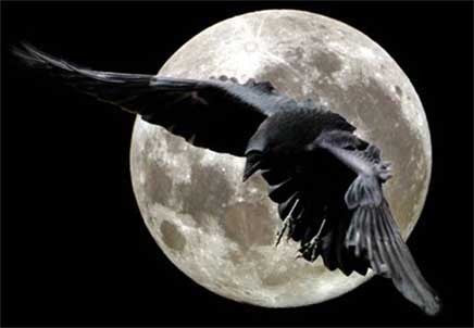 Crow Moon Drum Journey Meditation with Joanne