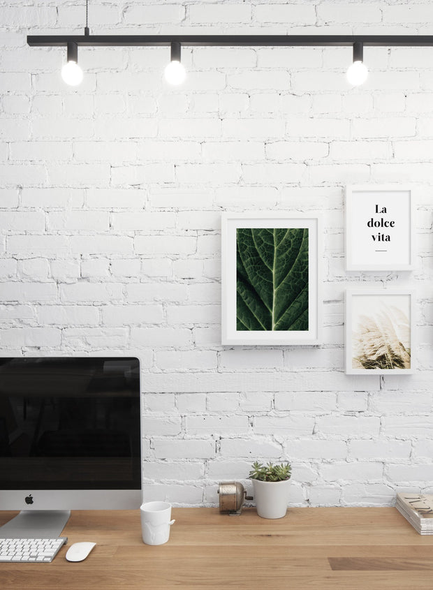 Minimalist poster trio featuring picture of close up detailed leaf botanical photography - Office