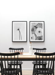 Minimalist wall poster by Opposite Wall of Black and White Gerbera Daisy photography duo - Dining Room