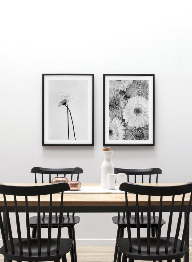 Minimalist wall poster duo of black and white gerbera daisy flower photography - Dining Room
