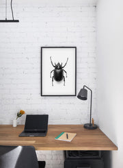 Beetle modern minimalist black and white animal photography poster of black beetle coleptera by Opposite Wall - Office Desk