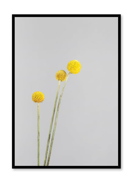 Scandinavian poster by Opposite Wall with minimalist photo of Billy Buttons