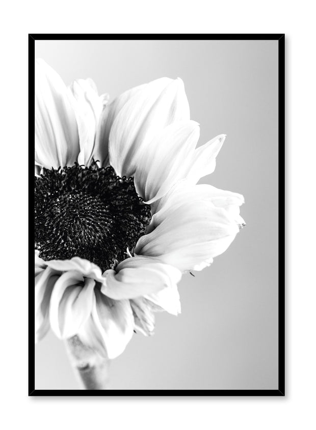 Scandinavian poster by Opposite Wall with black and white sunflower photography