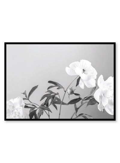 Modern minimalist poster by Opposite Wall with Sweetness peony still life black and white photography