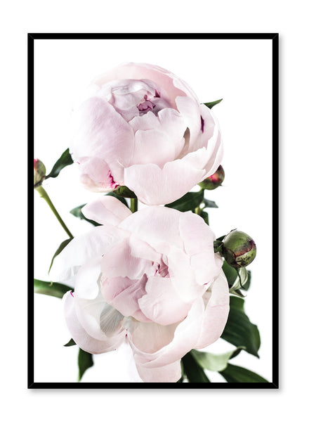 Scandinavian art print by Opposite Wall with delicate peonies Lovers art photography