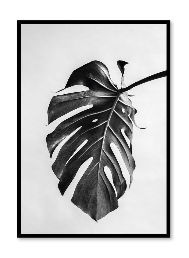 Scandinavian poster by Opposite Wall with black and white Monstera leaf photography