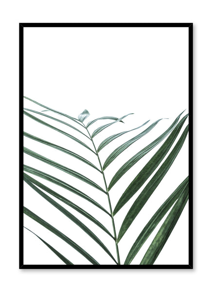 Minimalist botanical art poster by Opposite Wall with palm leaf Curves