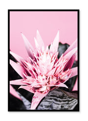 Scandinavian poster by Opposite Wall with trendy Prickly Pink cactus art photo print