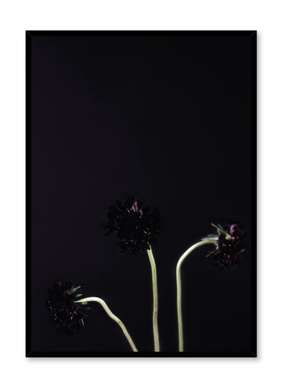 Modern minimalist poster by Opposite Wall with trendy black on black honeysuckle photography