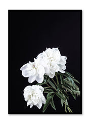 Scandinavian art print by Opposite Wall with Peony White on Black art photo