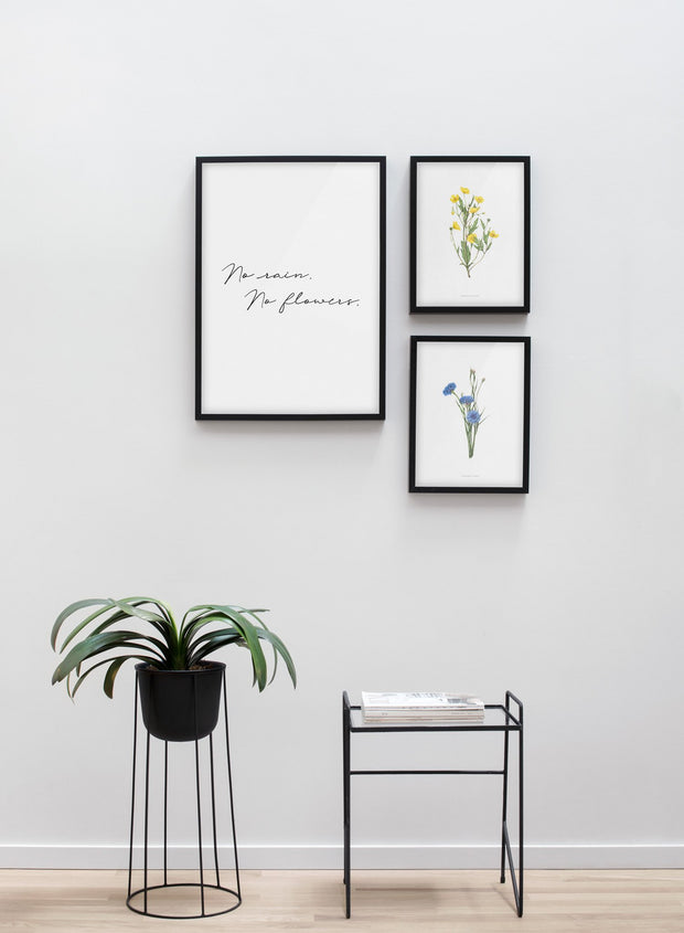 Modern minimalist poster by Opposite Wall with encyclopedic illustration of Centaura Cyanus - living room