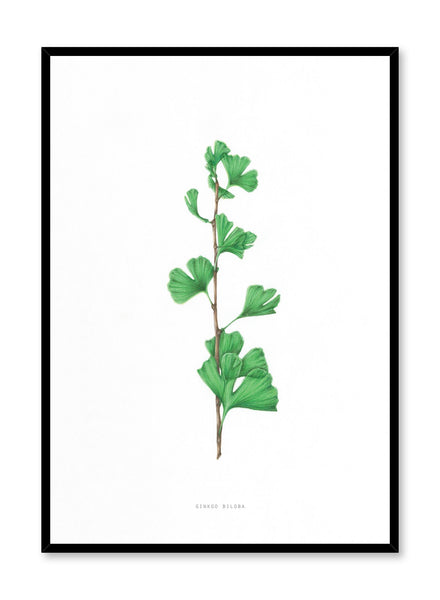 Modern minimalist poster by Opposite Wall with encyclopedic illustration of Ginkgo Biloba