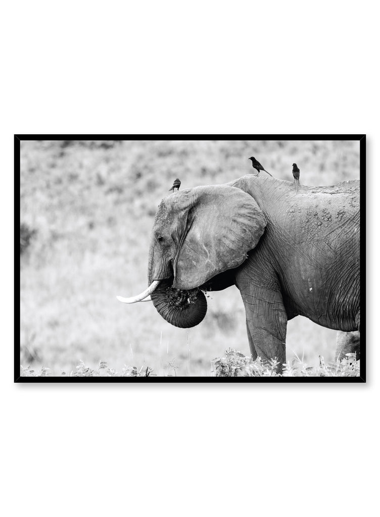 Modern minimalist black and white photo print of elephant by Opposite Wall
