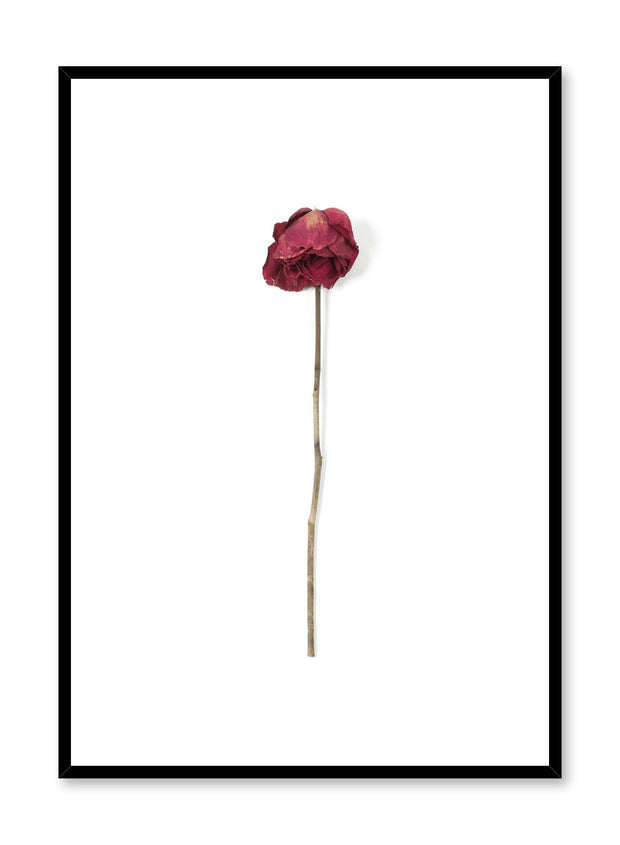 Scandinavian art photo print by Opposite Wall with a dried rose print