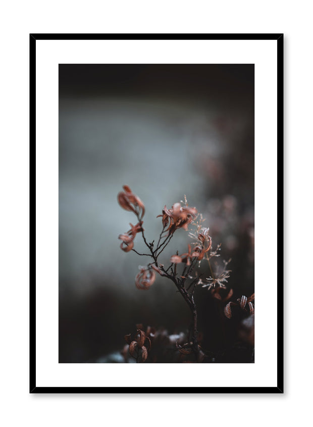 Scandinavian art print by Opposite Wall with delicate flower art photo
