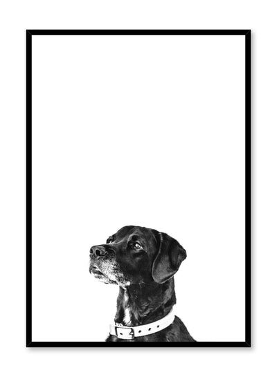 Modern minimalist black and white photo print of a dog by Opposite Wall