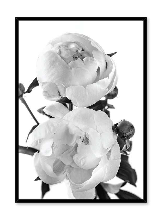 Scandinavian art print by Opposite Wall with delicate peonies Lovers art photography in black and white