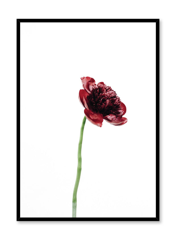 Minimalistic wall poster by Opposite Wall with Bold Bloom red peony flower photography