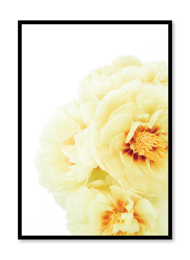 Minimalist wall poster by Opposite Wall with yellow peony bloom floral photography
