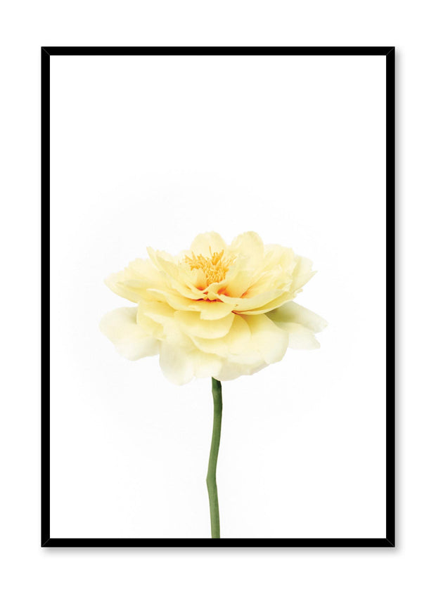 Minimalistic wall poster by Opposite Wall with Petal Burst floral photography