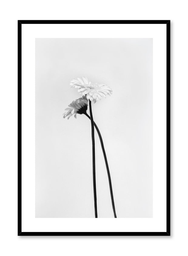 Minimalistic wall poster by Opposite Wall with Black & White Gerbera flower photography