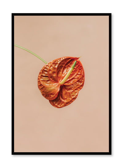 Minimalistic wall photography by Opposite Wall with orange Anthurium botanical photography