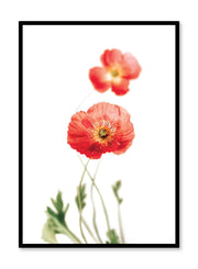 Minimalistic wall poster by Opposite Wall with Poppies floral photography