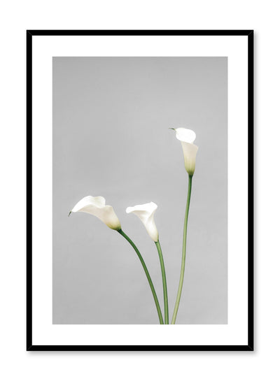 Minimalistic wall poster by Opposite Wall with white Calla Lily flower photography