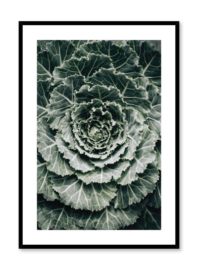 Minimalistic wall poster by Opposite Wall with ornamental cabbage botanical photography