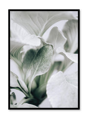Minimalistic wall poster by Opposite Wall with elegant leaves botanical photography