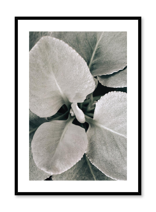 Minimalistic wall poster by Opposite Wall with dusted leaves botanical photography