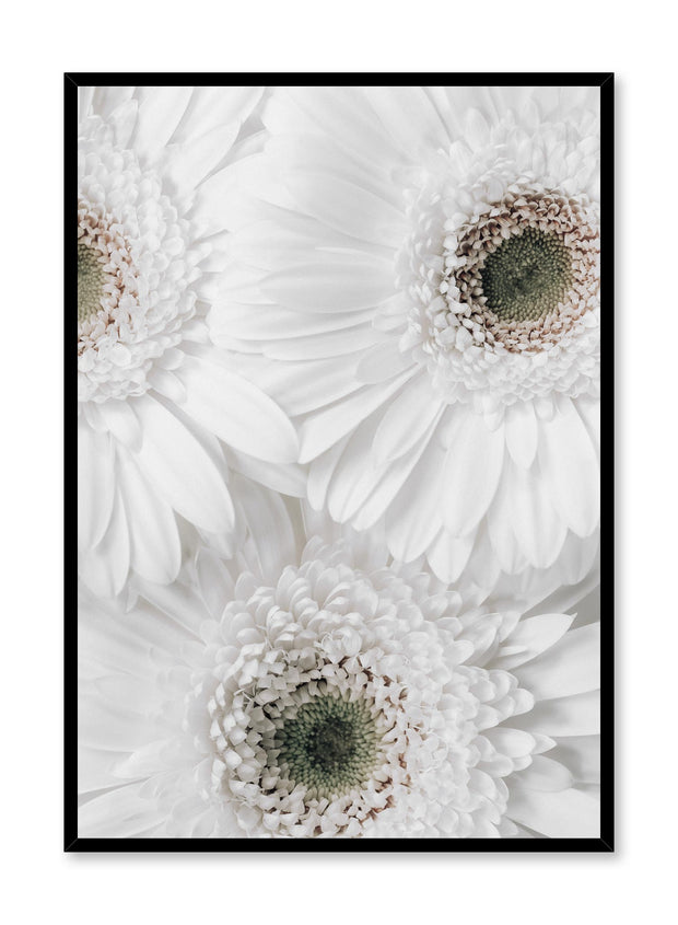 Minimalist wall poster by Opposite Wall with White Daisy flower photography