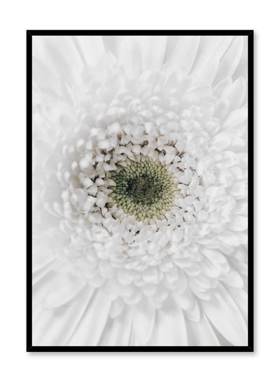 Minimalist wall poster by Opposite Wall with white gerbera daisy floral photography