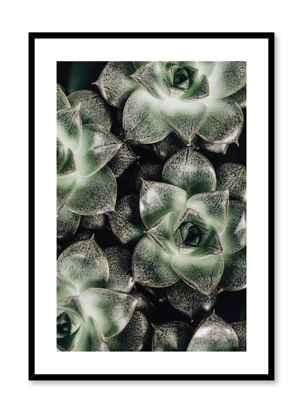 Minimalistic wall poster by Opposite Wall with green succulents botanical photography