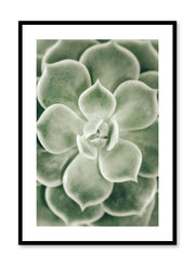 Minimalistic wall poster by Opposite Wall with Echeveria succulent botanical photography
