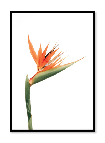 Minimalistic wall poster by Opposite Wall with Bird of Paradise flower photography