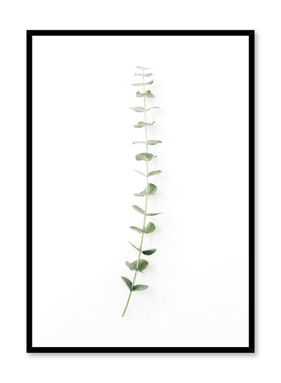 Minimalistic wall poster by Opposite Wall with eucalyptus stem photography
