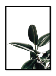 Minimalistic wall poster by Opposite Wall with rubber tree botanical photography