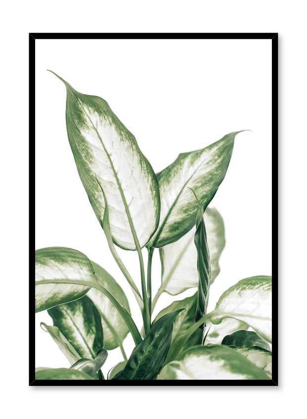 Minimalistic wall poster by Opposite Wall with leopard lily botanical photography
