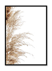 Minimalist wall poster by Opposite Wall with wispy grasses botanical photography