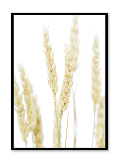 Minimalist wall poster by Opposite Wall with wheat botanical photography