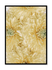 Minimalist wall poster by Opposite Wall with yellow chrysanthemum floral photography