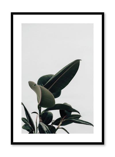 Minimalistic wall poster by Opposite Wall with Ficus rubber elastica botanical photography