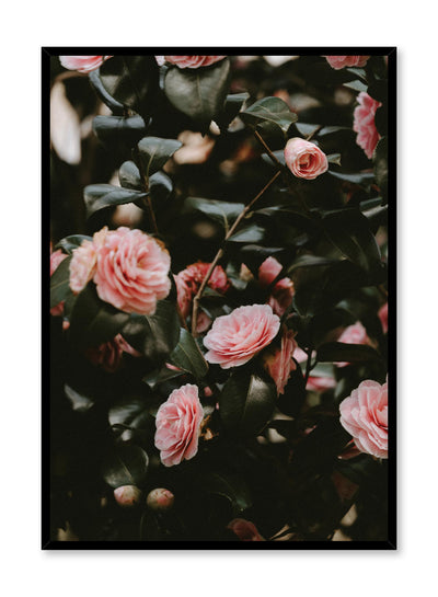Minimalist design poster by Opposite Wall with Pink Rosebush floral photography