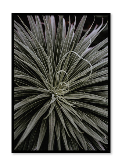 Minimalist design poster by Opposite Wall with Spidery Plant botanical photography