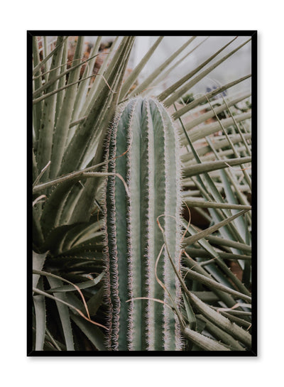 Minimalist design poster by Opposite Wall with Cactus in nature botanical photography