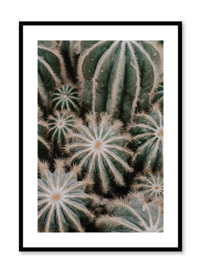 Minimalist design poster by Opposite Wall with Cacti botanical photography