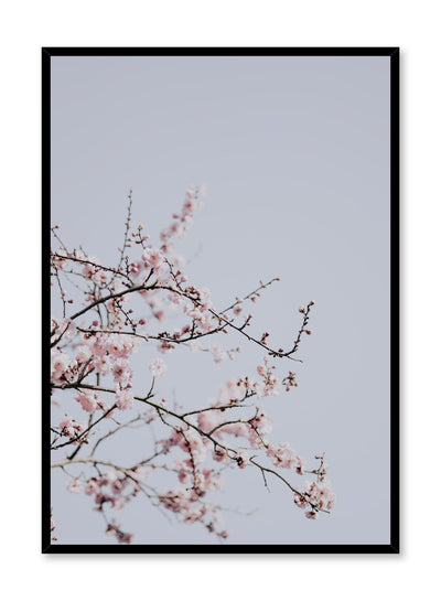 Minimalist design poster by Opposite Wall with Cherry Blossom floral photography