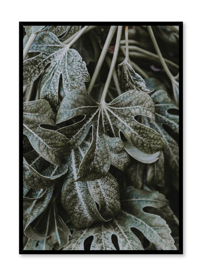Minimalist design poster by Opposite Wall with Ageing Beauties leaf botanical photography
